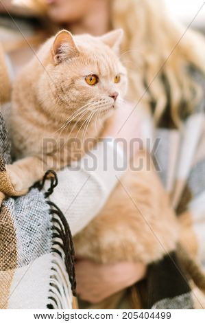 animals, lifestyle, nature concept. in arms of its owners, loving couple, there is extremelly beautiful cat of light orange colour and charming bright eyes