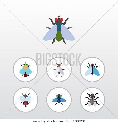 Flat Icon Housefly Set Of Fly, Tiny, Hum And Other Vector Objects