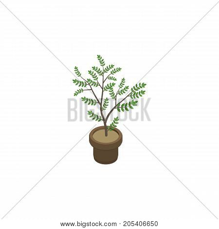 Fern Vector Element Can Be Used For Plant, Flowerpot, Houseplant Design Concept.  Isolated Houseplant Isometric.