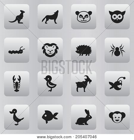 Set Of 16 Editable Zoo Icons. Includes Symbols Such As Porcupine, Wildcat, Crawfish And More