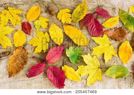 autumn, arranging, decoration concept. top view on the leaves from different trees such as maple, poplar, oak and other. each of them has its own form, size and even shade