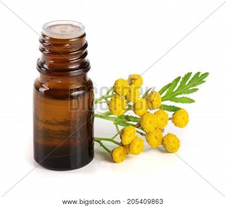 essential tansy oil with flowers and leaf isolated on white background.