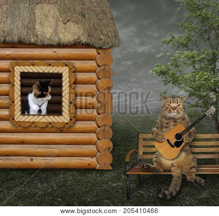 The cat sings a romantic song for his beloved under the window.