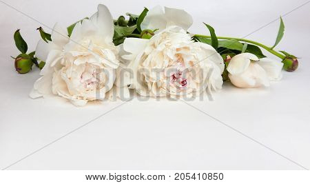 Decorative card with white peonies flowers llying on white background. Beautiful Horizontal Web Banner With Copy Space. Card for invitation congratulation.