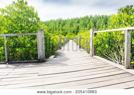 The mangrove forest in Rayong of Thailand Tung Prong Thong.