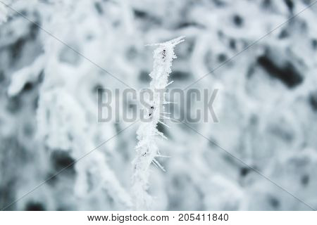 Frozen branches winter forest background white texture