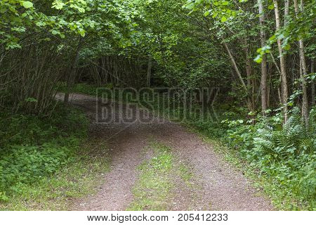 Hazel shrubbery covers a gravel road. Dark light under the leaves, some beams from the left.