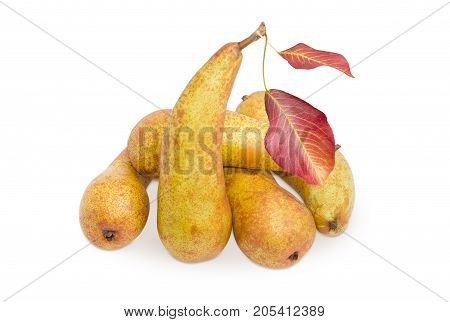 Several ripe light brown European pears of autumn variety Bere Bosc with two leaves on a white background
