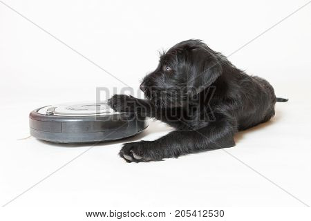 Studio shot of cute puppy of the Giant Black Schnauzer dog is lying and holding the robotic vacuum cleaner. All potential trademarks and control buttons are removed.View from a higher angle.