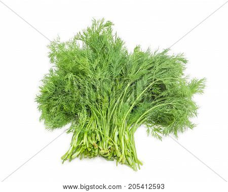 Bundle of freshly harvested dill on a white background