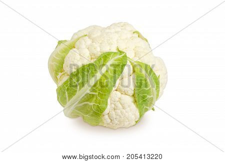 Head of the freshly harvested white cauliflower on a white background