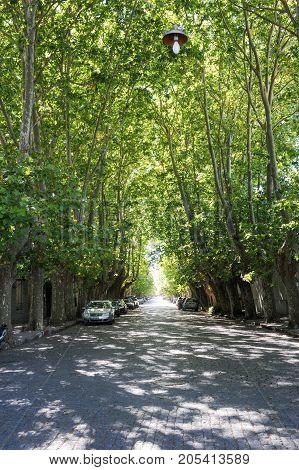 Colonia del Sacramento Uruguay - 13 february 2011: Tree-lined avenue at Colonia del Sacramento in Uruguay