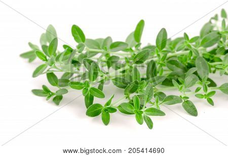 Fresh thyme spice isolated on white background.