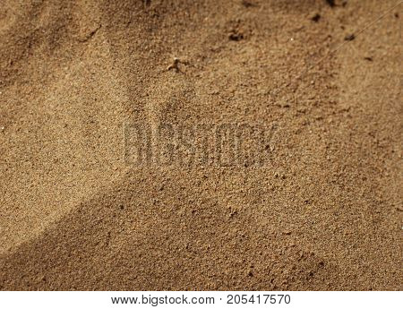 background of soil and sand . In the park in nature