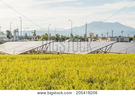 Solar power panels Photovoltaic modules for innovation green energy for life Rice fields.