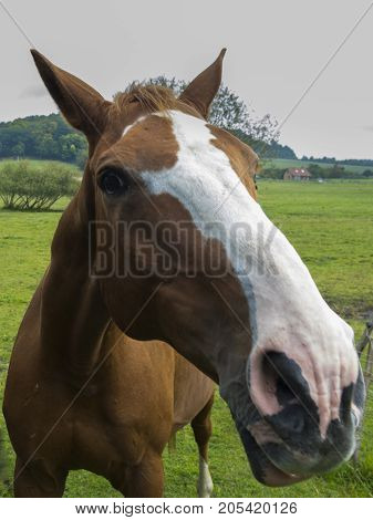 Brown and white spotted horse with brown mane on grazing land. Near view to horse´s eye. Horse portrait.
