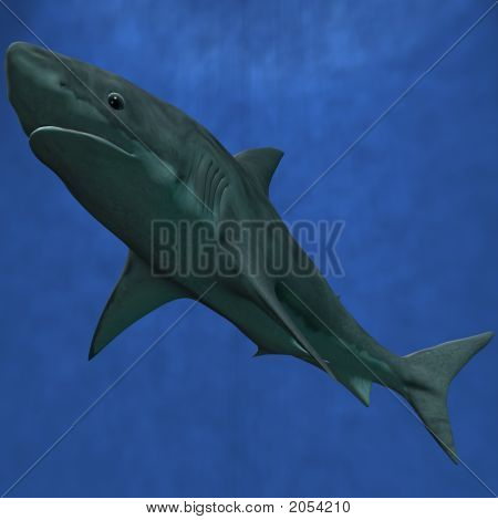 3 D Computer Render of an Great White Shark poster