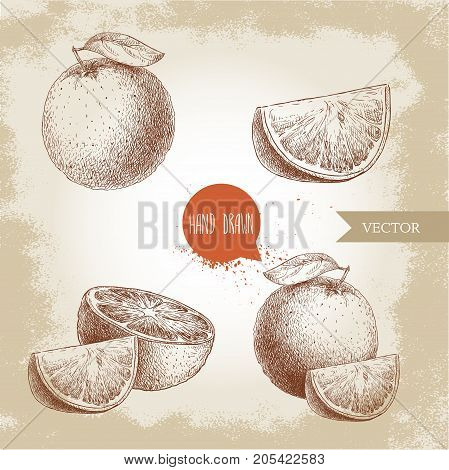 Hand drawn sketch style orange fruit compositions set. Whole fruit and slices. Hand made vector citrus fruit illustration isolated on old looking background.