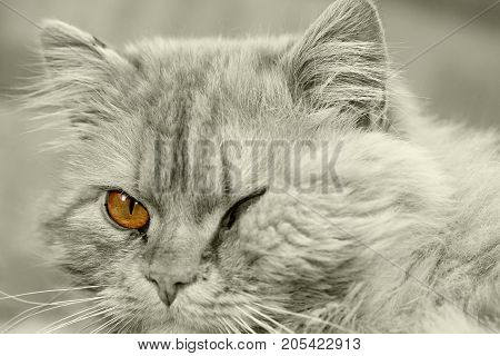 cat closed one eye . In the park in nature