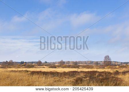 The Brackvenn in the High Fens (Hohes Venn Hautes Fagnes) in eastern Belgium in autumn. poster