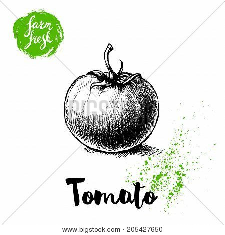 Hand drawn sketch style whole tomato. Eco food vector illustration poster. Farm fresh food.