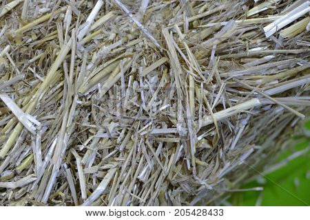 Detail Of Dried Straw In A Pile