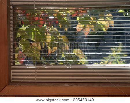 Colorful autumn leaves through the window blinds contra light indoor shot