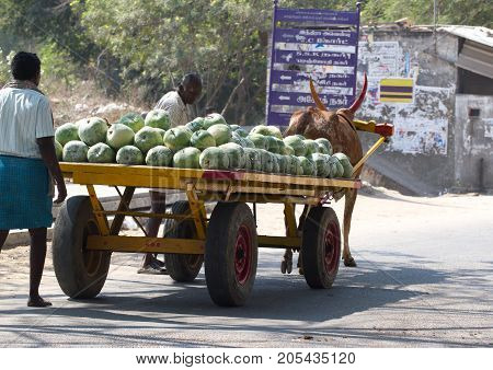 Kanchipuram, Tamil Nadu, India, March 19, 2015: Unidentified men carry crop of watermelons on wooden cart