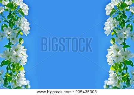 Blossoming branch apple. Bright colorful spring flowers