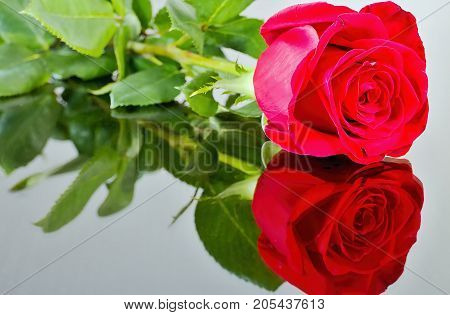 Red rose with reflection in mirror. Valentine's day theme Mother's day theme International women's day Birthday celebration concept Names day celebration. For lovers. Rose leaves and mirror. Romantic atmosphere. Romantic moments.