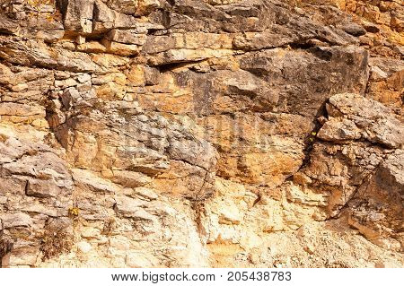 life, biology, ecology concept. grains of various weeds are transferred by wind to the cracks of the mountain side and then they are growing there, fighting for their existence