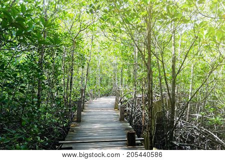 Tung Prong Thong Nature Preserve and Forest in Rayong of Thailand.