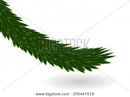 Naturalistic colorful fir branch. Vector Illustration. EPS10