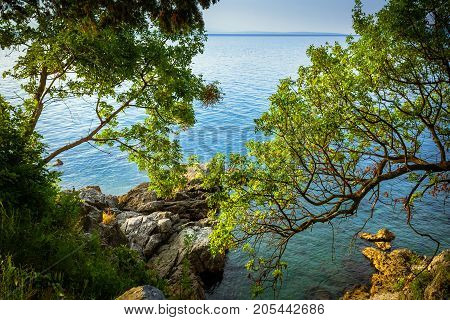 A view through tree branches to the sea