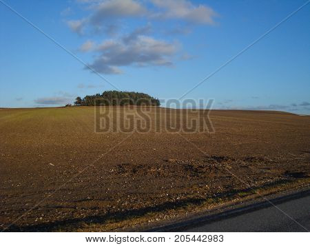 Danish field on a sunny day during spring
