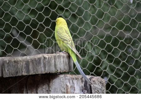 Portrait of a parrot at the zoo inside a aviary