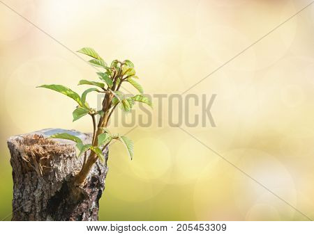 New development and renewal as a business concept of emerging leadership success as an old cut down tree and a strong seedling growing in the trunk as a concept of support building a future.