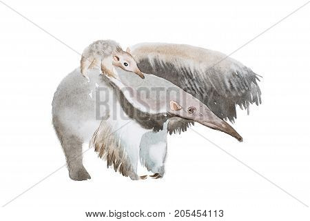 Watercolor illustration of anteater family mother and a baby.