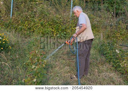 Senior man watering plants in his garden. Retired gardener watering the garden with hose. Happy older man gardening.