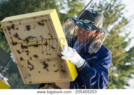 Senior beekeeper checking a beehive to ensure health of the bee colony or collecting honey.