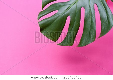 a monstera leaf on the pink background