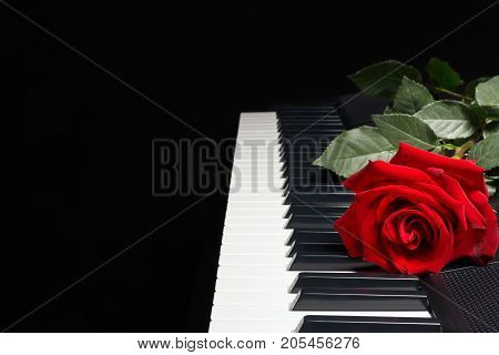 Red rose on the keys of the synthesizer on a black background