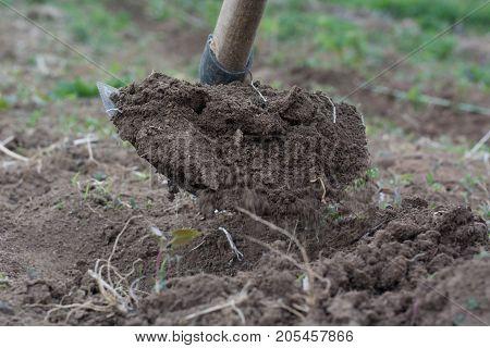 Garden Hoe Weeding A Garden Area And Dirt Path