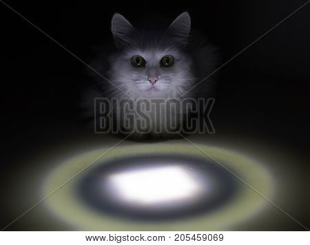 Moon Cat with Light Circle (night time)