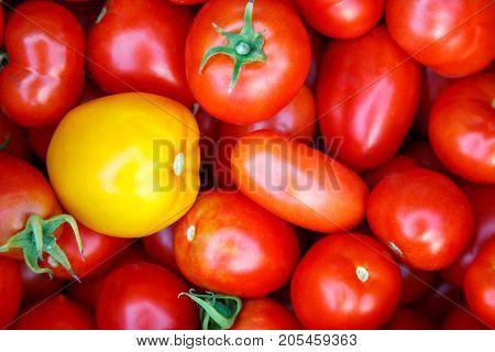 Photo Of Very Fresh Tomatoes Presented