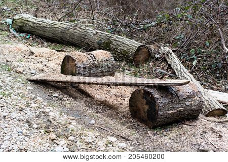Chopping Place With Logs And Dust. Rural