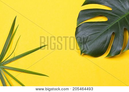 a monstera leaf on the yellow background