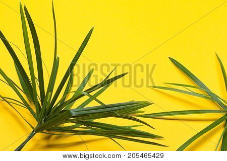 Tropical leaves on yellow background. minimal concept. Flat lay.
