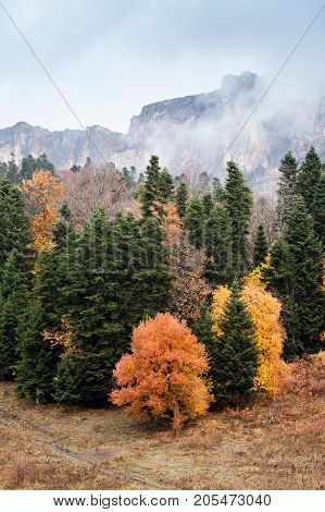 weather, autumn, air polution concept. the mountain covered by fog and clouds rises under mixed forest with foliage that turned orange and yellow with the coming of fall