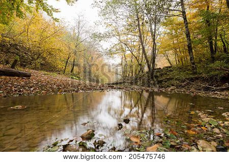 weather, seasons, travelling concept. there is autumnal grove with trees and bushes turned yellow, with dead leaves on the ground, that is reflected in the big puddle forming after downpour